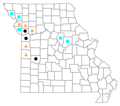 Historical county map for Gastrophryne olivacea (Western Narrow-mouthed Toad)