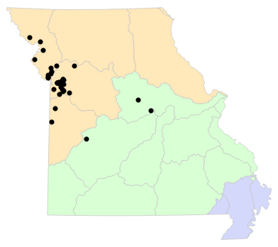 Ecological Drainage Units map for Gastrophryne olivacea (Western Narrow-mouthed Toad)